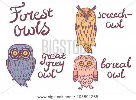 Forest owls collection