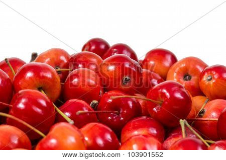 beautiful red paradise apples on an isolated