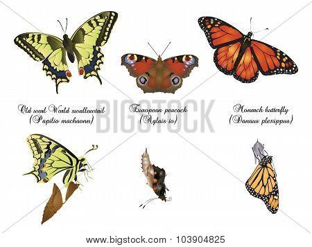 Amazing nature set - butterfly birth