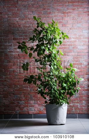 Plant on brick wall background