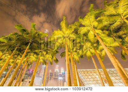 Palms in Singapore during night time