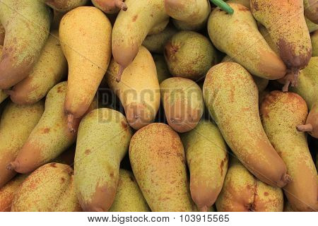 Pears on a large harvest