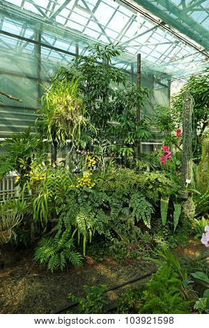 Tropical Plants in greenhouse at botanic garden