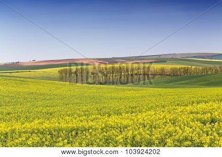 Rape field waves, South Moravia