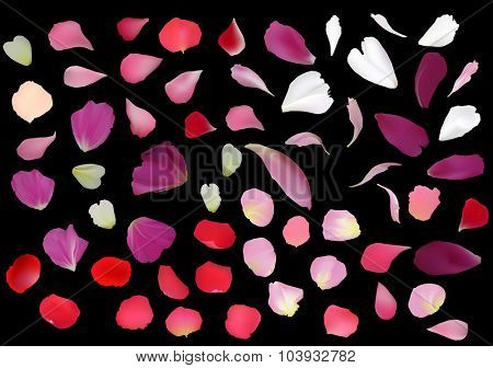 illustration with rose petals isolated on black background