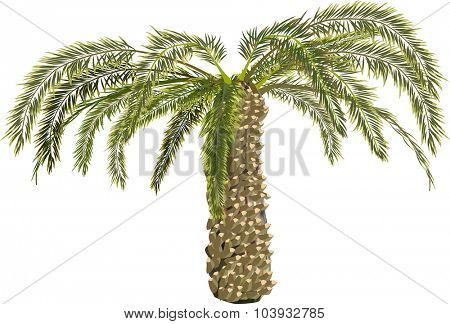 illustration with single palm tree isolated on white background