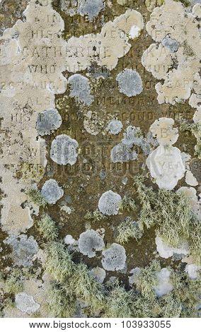 Lichen On Scottish Gravestone