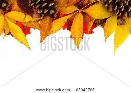 Border of autumn leaves and pine cones over white