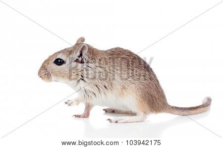 Profile of a mouse isolated on a white background
