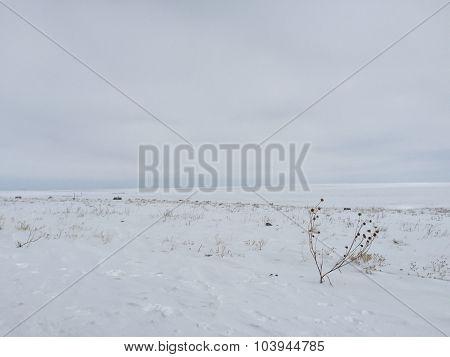 Snow on a Desolate Prairie