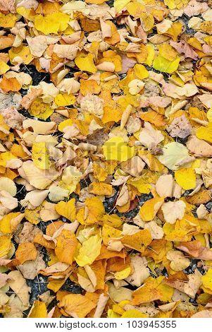 Leaves On Th Road