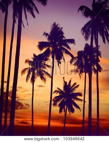 Silhouette Coconut Palm Tree Outdoors Tranquil Concept