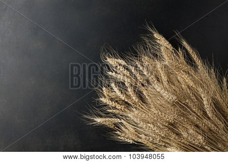 wheat on black background. top view