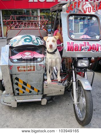 Dog Guards A Motorcycle Taxi