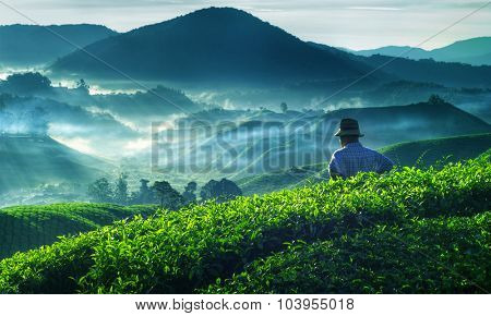 Farmer Tea Plantation Malaysia Culture Occupation Concept