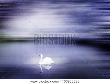 Beautiful Swan Lake in Winter Scene Peaceful Concept