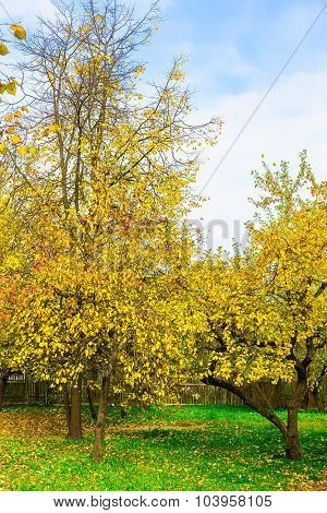 Autumn Nature Of Branchy Yellow Trees