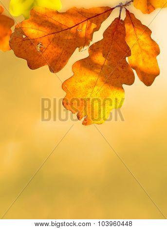 Beauty of autumn nature flora