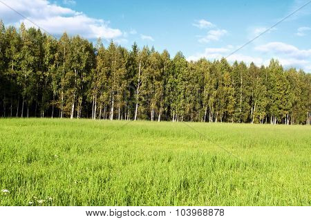 Grass field under blue sky.
