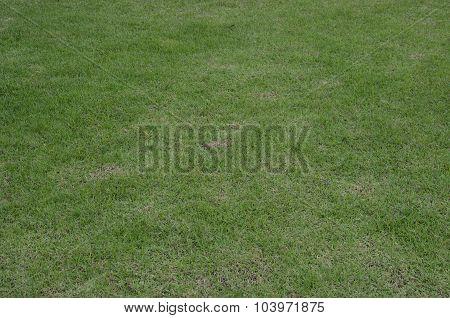 Green Grass Turf Floor Texture Background