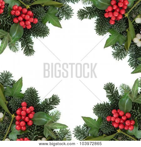 Christmas and winter background border with holly, ivy, mistletoe, blue spruce fir over white.