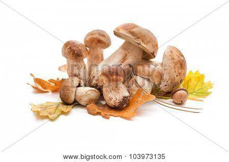 Porcini mushrooms with autumnal leaves isolated on white background