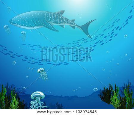 Whaleshark swimming under the ocean illustration