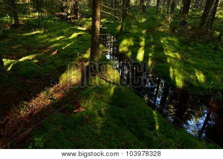 Sunlight On The Forest Ground Cover Of Moss Forest On The Banks Of The Creek