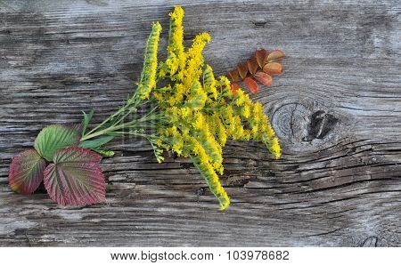 Leaves and Flowers on Old Board