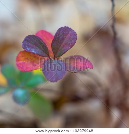 close-up photo of colorful autumn leaves.  soft focus