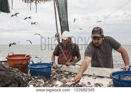 Commercial fishermen sorting catch of shrimp on board ship