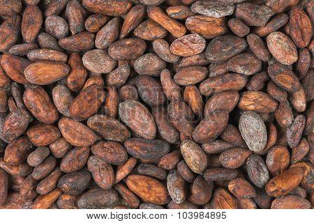 Raw Cocoa Or Cacao Beans
