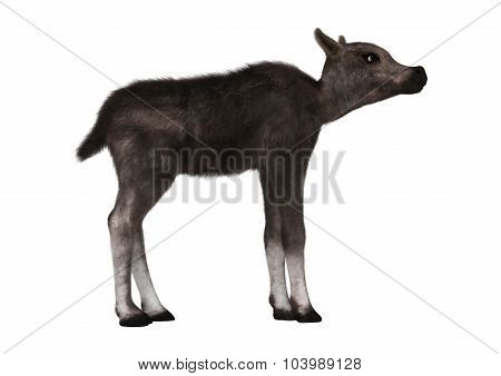 Caribou Calf