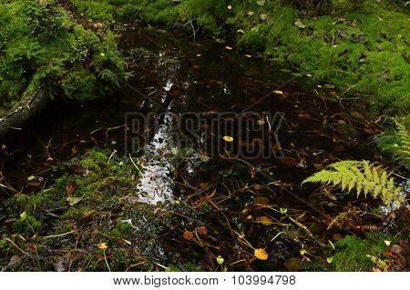 Clear Water Stream In The Forest At The Bottom Of Fallen Autumn Leaves