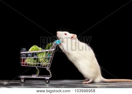 Cute pet rat with a shopping cart on dark background