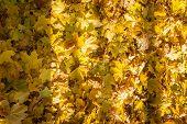������, ������: Autumn Trees Yellow Leaves On Trees Autumn Landscape Autumn P