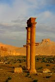 picture of euphrat  - historic columns at ancient palmyra in syria - JPG