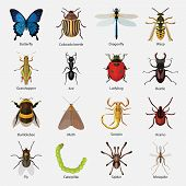 Set of insects flat style design icons. Butterfly, Colorado beetle, Dragonfly, Wasp, Grasshopper, An poster