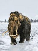 Постер, плакат: Woolly Mammoth