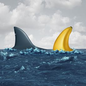 picture of lobbyist  - Unfair negotiation business concept and out of your league symbol as a shark fin facing off with a similar shaped banana as a metaphor for lack of skills and vulnerable negotiating icon for a contract or agreement - JPG