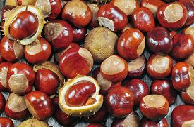 pic of chestnut horse  - Close up photo of a horse chestnuts - JPG