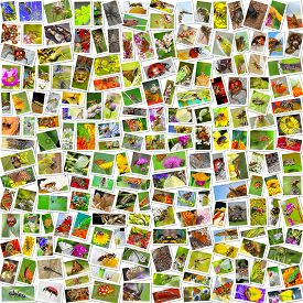 picture of siberia  - A collage of photos of different insects can be found in Russia - JPG