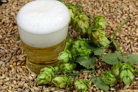 stock photo of malt  - A glass of beer with malt and hops - JPG