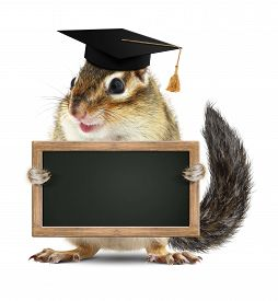 stock photo of laughable  - Funny chipmunk graduate hold blank blackboard on white - JPG