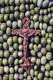 foto of opiate  - Brown crucifix placed on green poppy heads - JPG