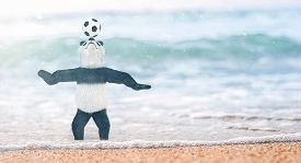 picture of panda bear  - miniature circus bamboo panda teddy bear stands on beach Gulf of Siam to his ankles in water - JPG