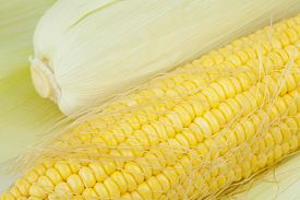 picture of corn cob close-up  - Close up of fresh corn cobs on background - JPG