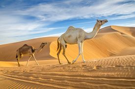 foto of oasis  - Taken in the Liwa Oasis Abu Dhabi area United Arab Emirates - JPG