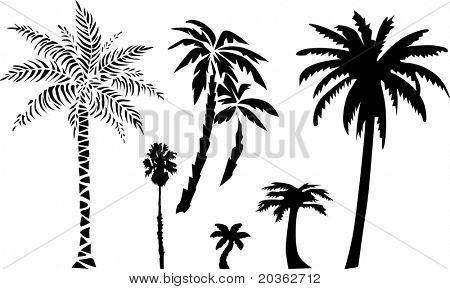 Palms (vector)