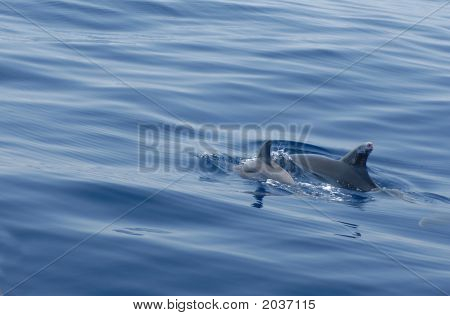 Couple Of Dolphins